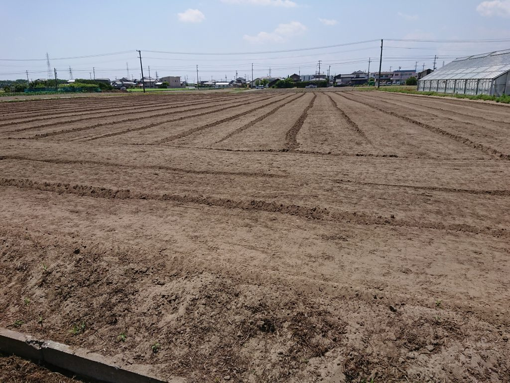 エゴマ畑の耕運