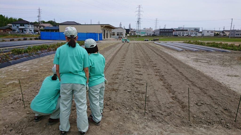 磐田農業高校でエゴマの取り組み